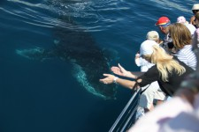 Whales just love to check out what's happening on the boat