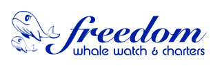 Freedom Whale Watch, Fishing and Dive Charters Hervey Bay QLD